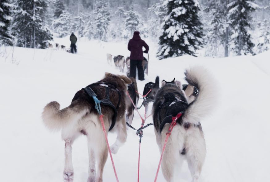 huskies-1024x589